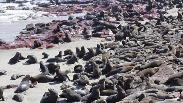 kolonie tuleňů na cape cross rezervy, pobřeží Atlantského oceánu v Namibii