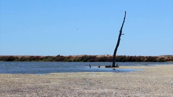 RIA formosa mokřadů v krajině algarve, Jižní Portugalsko