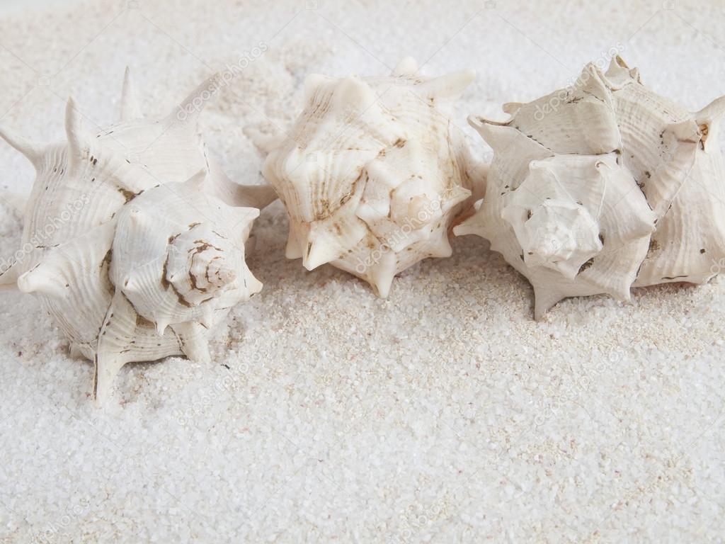 Marine shells on sand