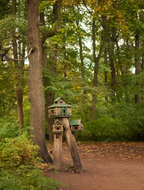 feeder for squirrels and birds in the forest