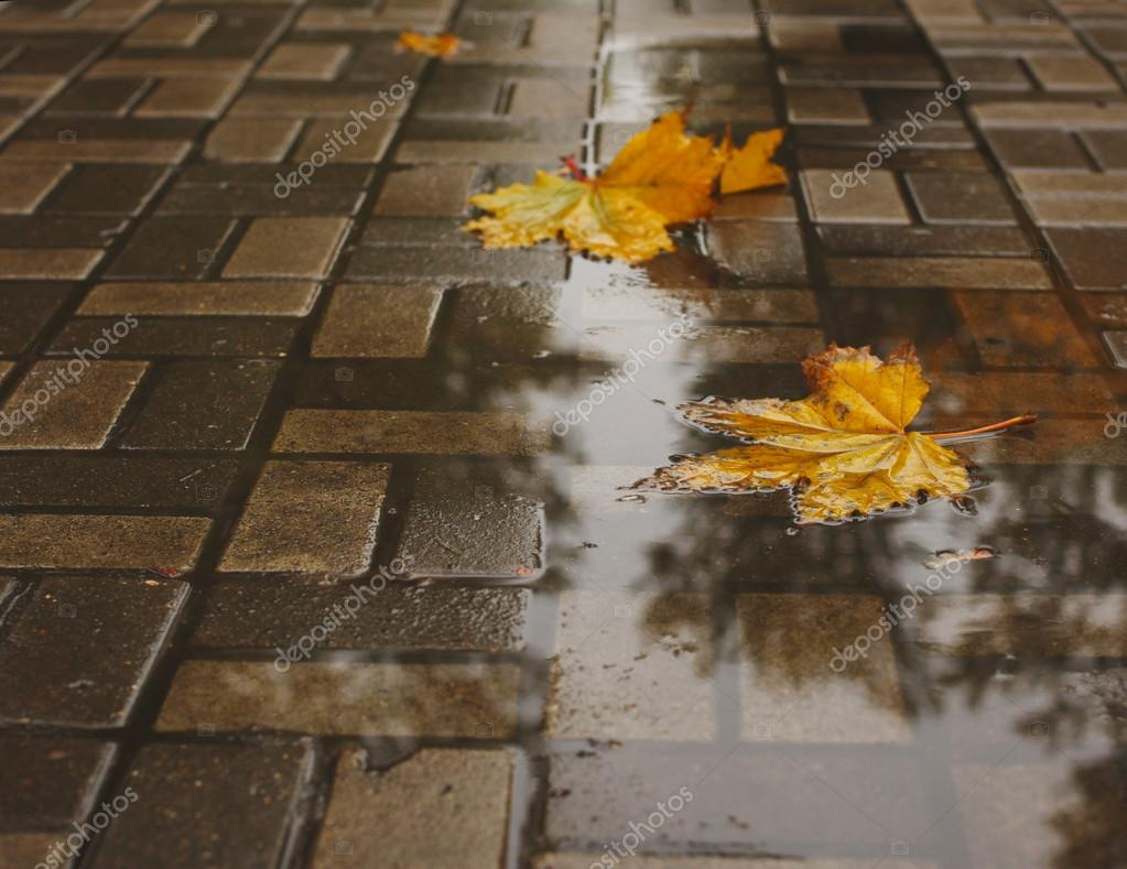 Yellow autumn leaves in a puddle.