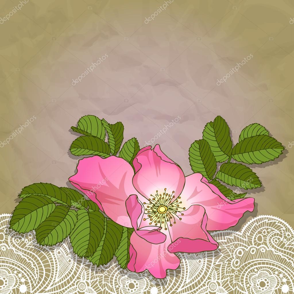 wildrose&lace