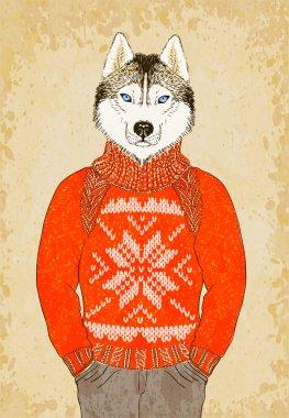 Husky Dog Wears Jacquard Sweater
