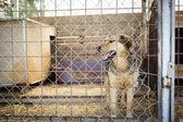 Hund sitzt im Käfig