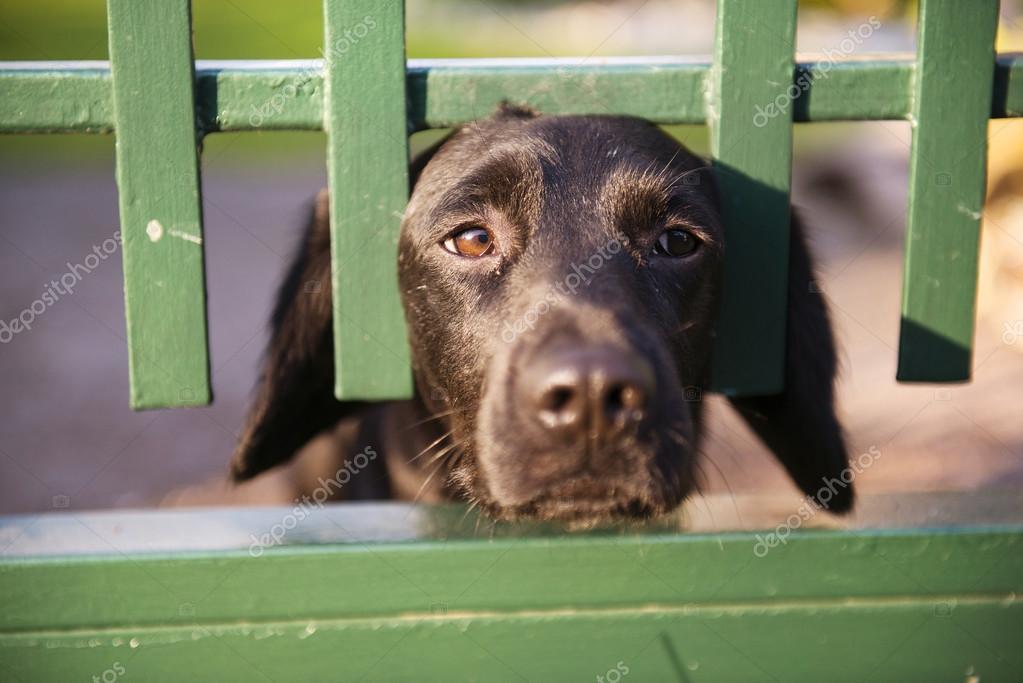 Hund Hinter Dem Garten Zaun Stockfoto C Halfpoint 49396723