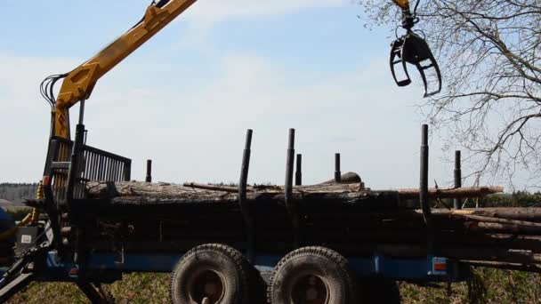 camion carico speciale con gru scaricare i log dal camion. foresta è caduto.