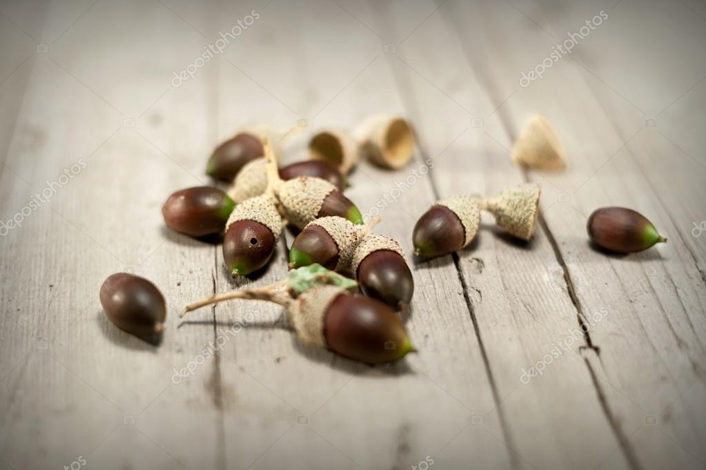 set acorns