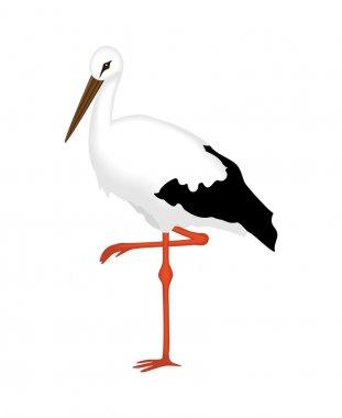 White Stork of a white background, vector illustration