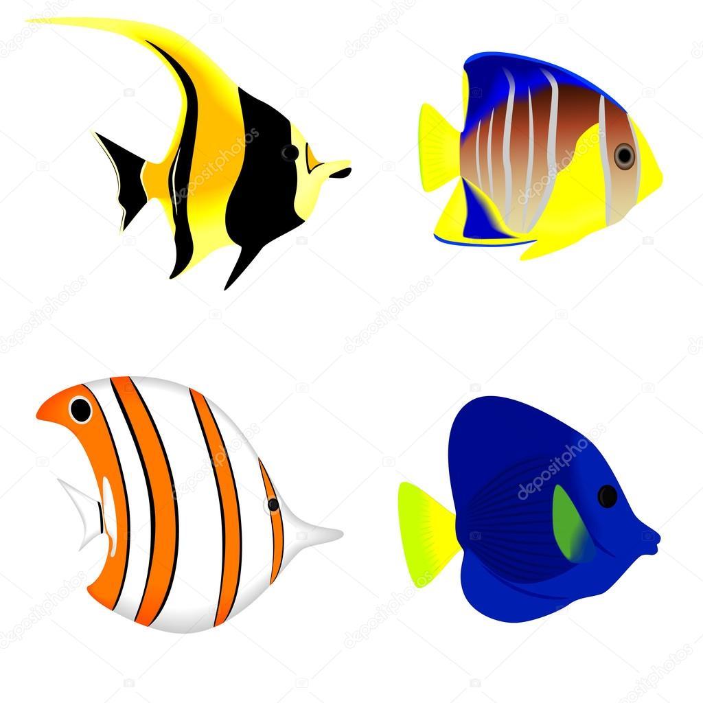 Ensemble d 39 un poisson tropical isol sur fond blanc illustration vectorielle image - Poisson dessin couleur ...