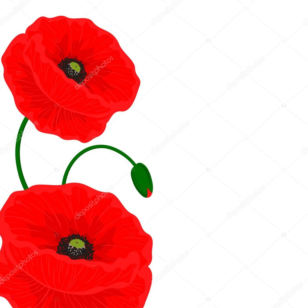 Card with red poppy flowers on a white background and free space for card with red poppy flowers on a white background and free space for your text mightylinksfo