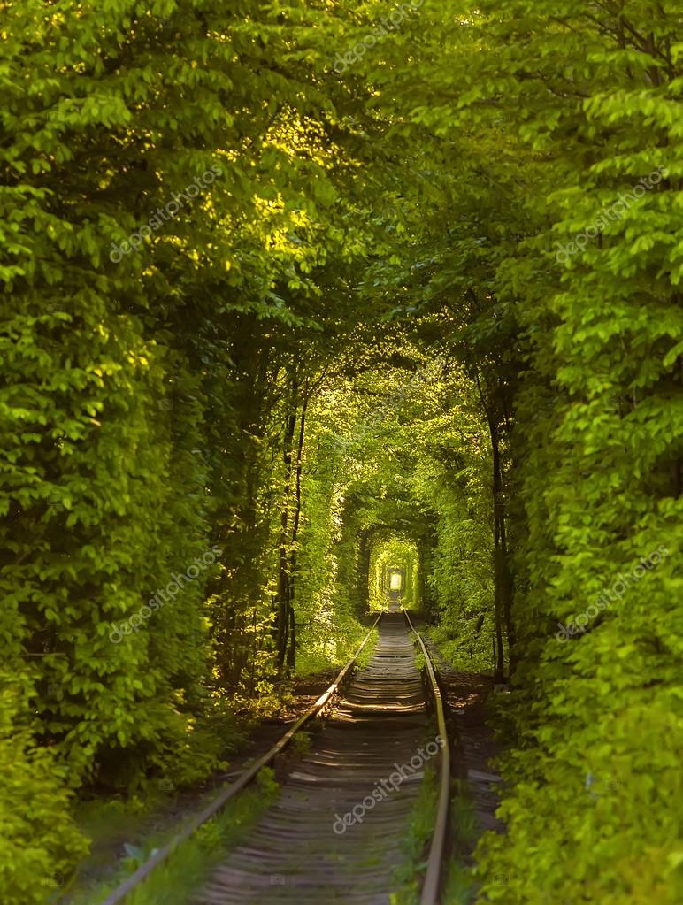 Natural tunnel of love formed by trees in Ukraine