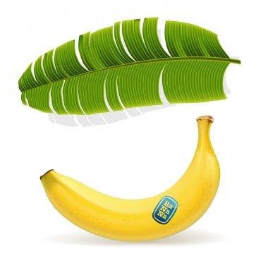 Ripe yellow banana under palm leaf