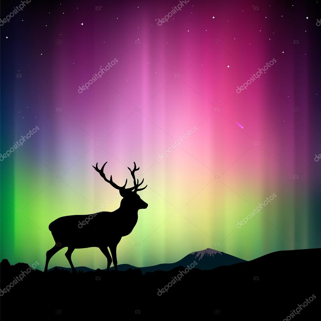 The northern lights with a deer