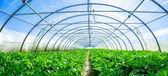 a növekvő zöldségek, az üvegházhatást okozó