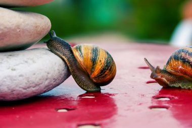 snail encouraged to climb by its congener