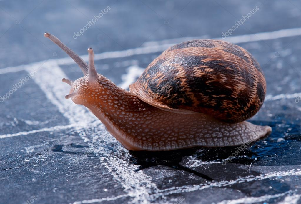 snail crosses the finish line as winner