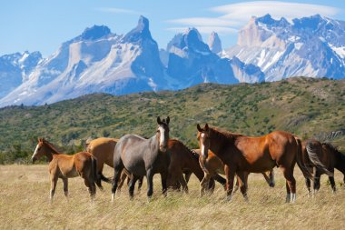Wild horses in the National Park