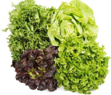 Lettuce (Lactuca sativa L.) several types.