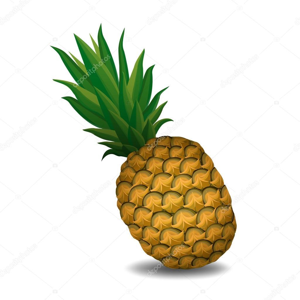 pineapple pineapple on white background - vector illustration