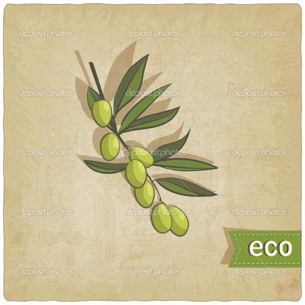 olive eco background