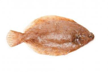 Lemon sole fish isolated on a white studio background.