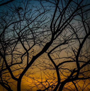 Silhouette tree in twilight time.