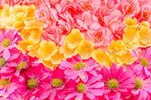 virágok háttér