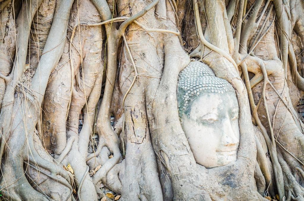 Buddha head statue under root tree in ayutthaya Thailand