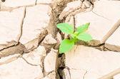 Fotografia pianta di crescita