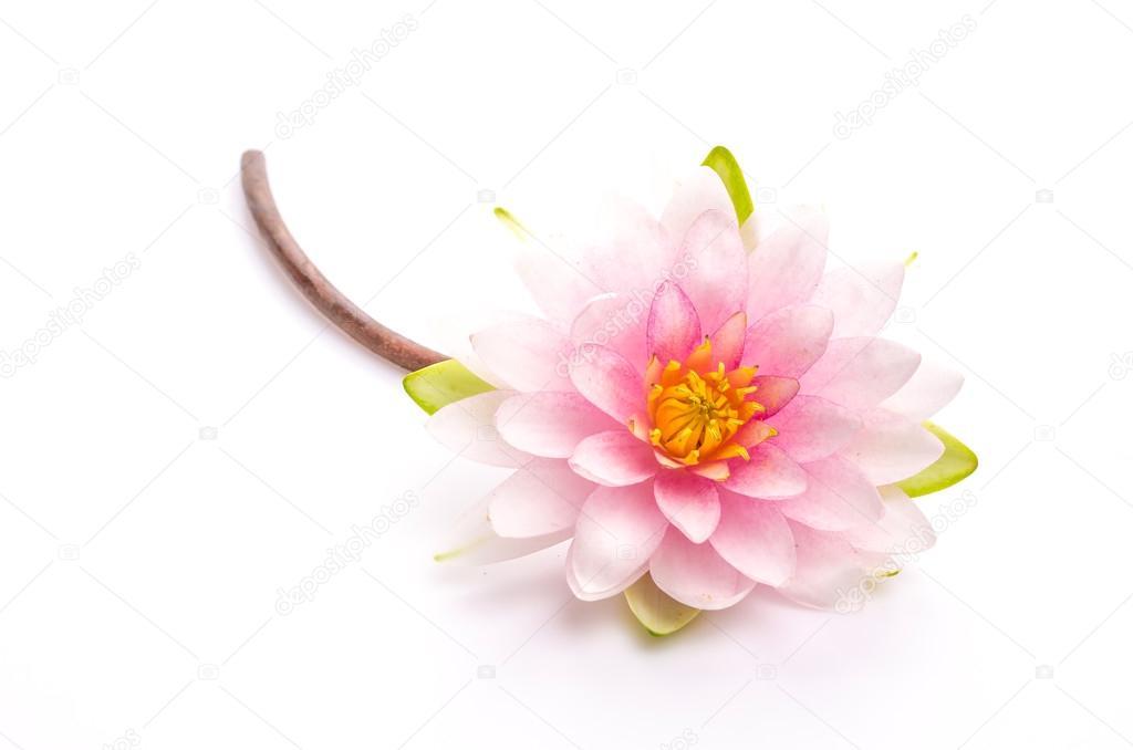 Lotus Blume, isoliert, weißer Hintergrund — Stockfoto © mrsiraphol ...