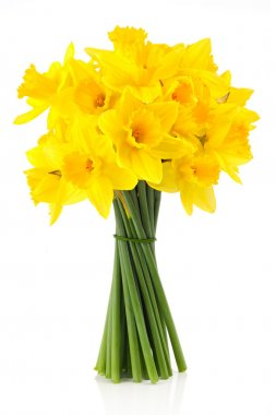 Lent lily (daffodil)