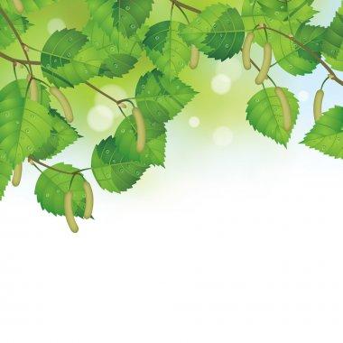 Birch leaves background