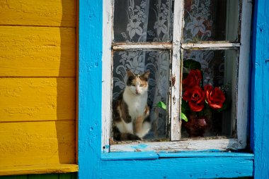 An old window is in rural locality, a cat sits after a window