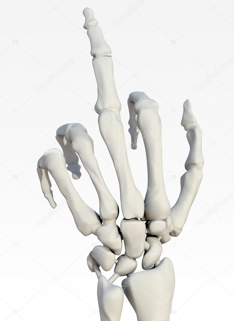 Skeleton hand making offensive gesture