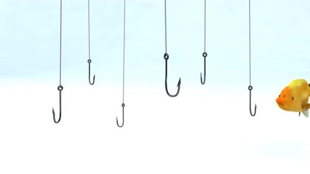 hal úszás között horgászat horgok, 3d animáció