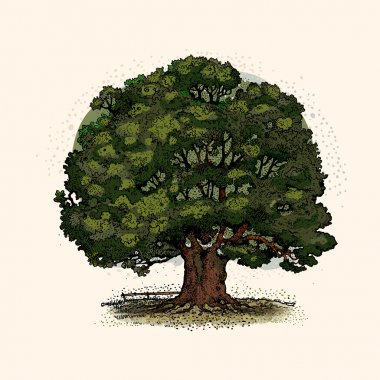 Oak tree. vector illustration isolated on light background stock vector