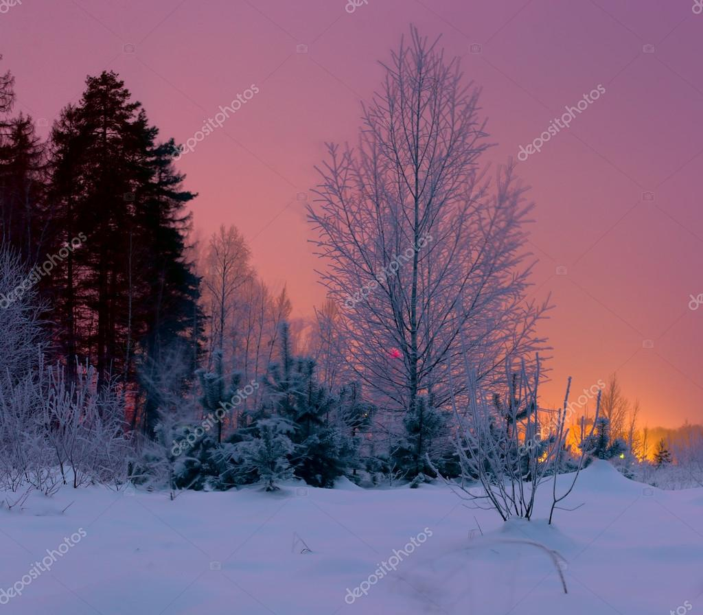 Fairytale frosty winter forest