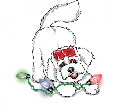Bichon Frise dog playing with colorful christmas lights