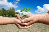 a két párt kezében zöld növény