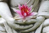 Fotografie Buddha ruce květinu, zblízka
