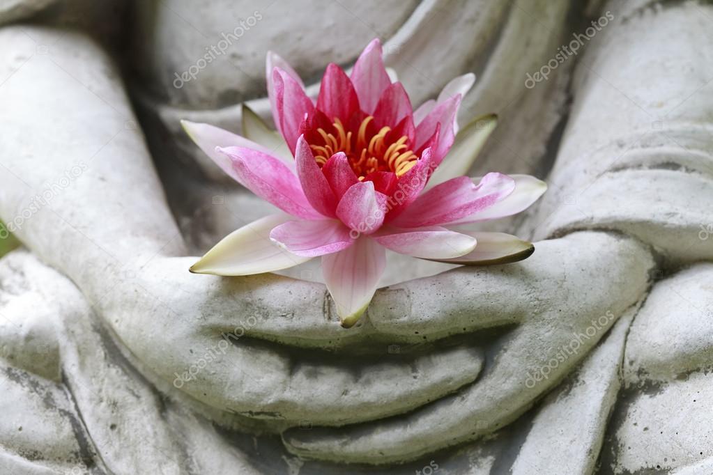 Buddha hands holding flower, close up
