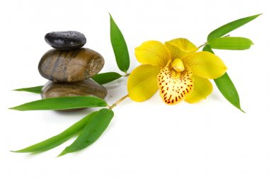 Yellow orchid with zen pebbles, isolated on white