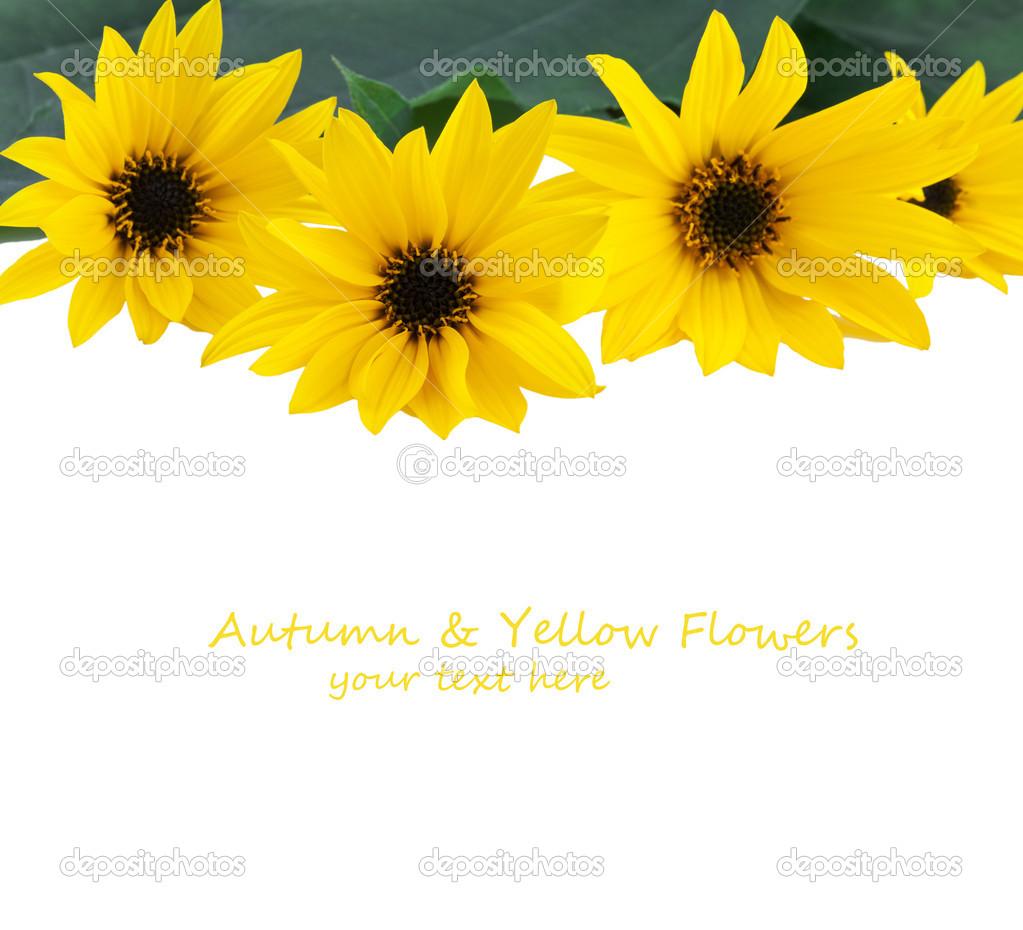 Yellow Flowers Border Stock Photo Anitasstudio 34241835
