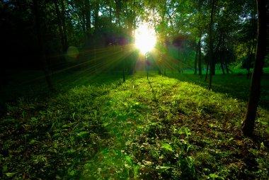 Dappled sunlight breaking through tall trees onto a path through a wood stock vector