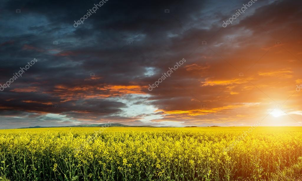 Beautiful green wheat field