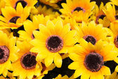 Sunflowers plastic