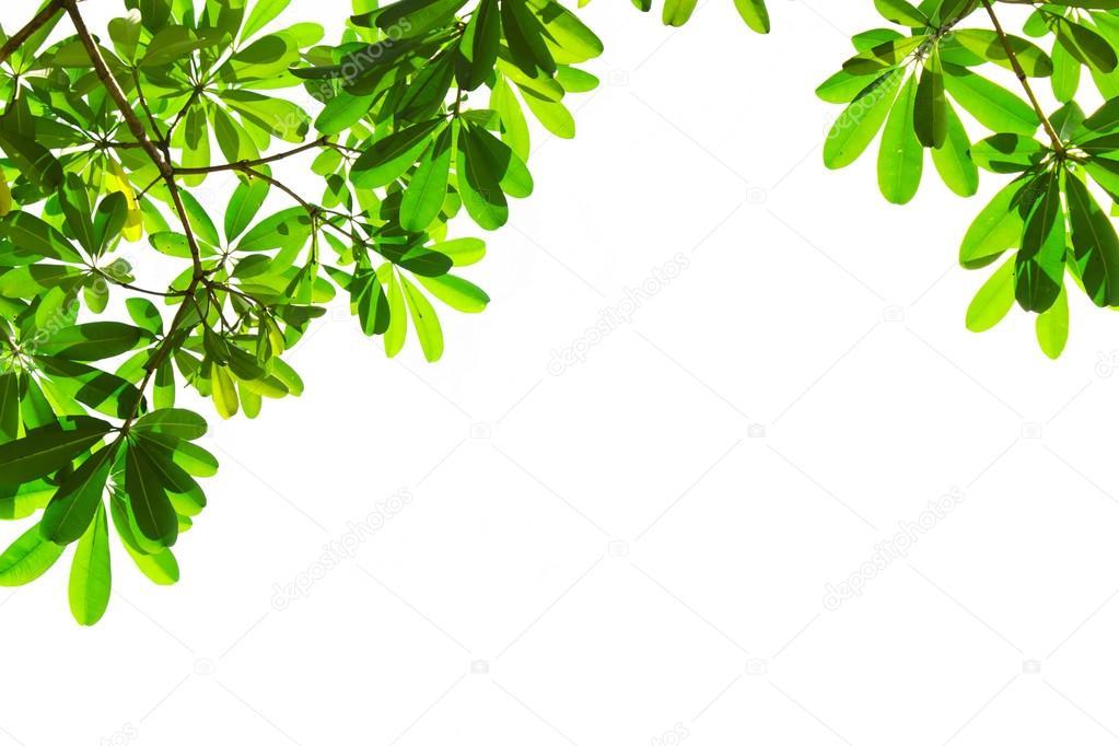 Marco De Hojas De Color Verde Sobre Fondo Blanco