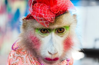 Portrait of Trained dressed monkey posing with turists in Thailand