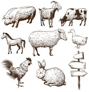 Set of farm animals isolated on a white backgrounds