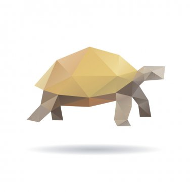 Turtle isolated on a white backgrounds